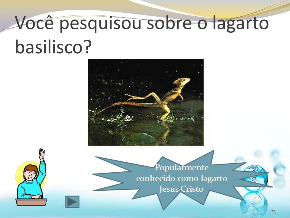 Você pesquisou sobre o lagarto basilisco? 23 Popularmente conhecido como lagarto Jesus Cristo