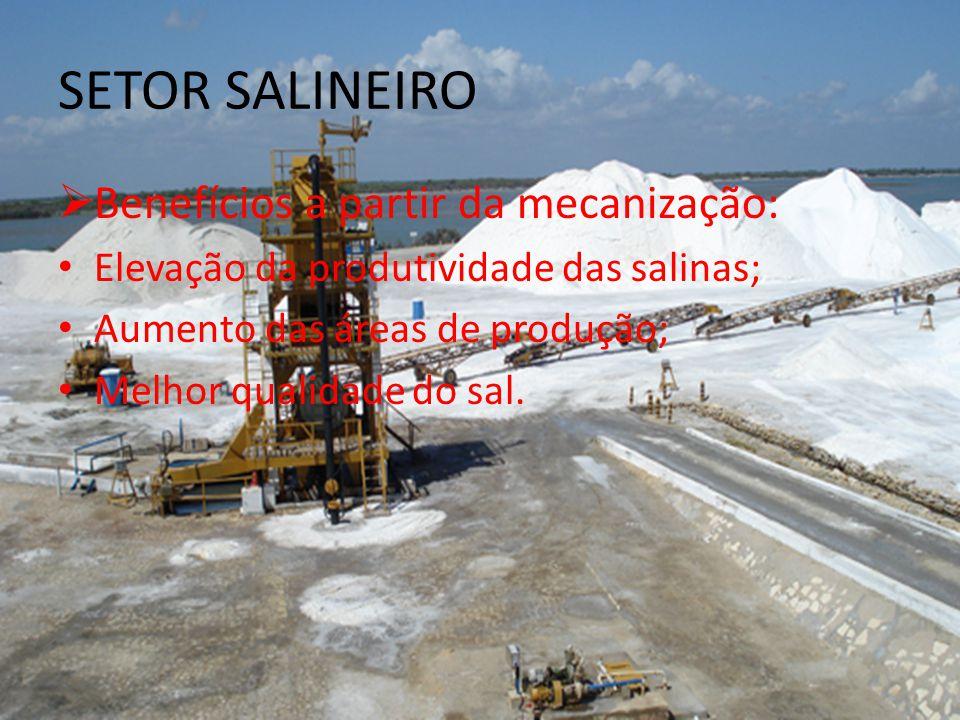 SETOR SALINEIRO Benefícios a partir da mecanização: Elevação da produtividade das salinas; Aumento das áreas de produção; Melhor qualidade do sal.