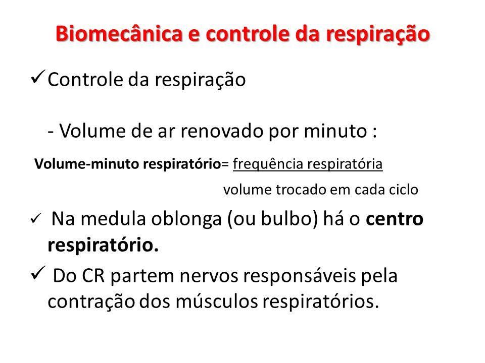 Controle da respiração - Volume de ar renovado por minuto : Volume-minuto respiratório= frequência respiratória volume trocado em cada ciclo Na medula oblonga (ou bulbo) há o centro respiratório.