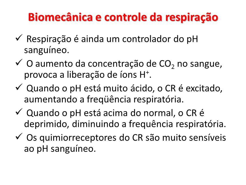 Respiração é ainda um controlador do pH sanguíneo. O aumento da concentração de CO 2 no sangue, provoca a liberação de íons H +. Quando o pH está muit