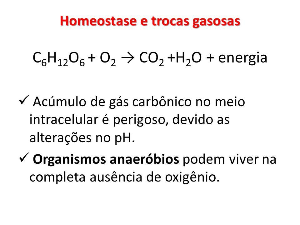 Homeostase e trocas gasosas C 6 H 12 O 6 + O 2 CO 2 +H 2 O + energia Acúmulo de gás carbônico no meio intracelular é perigoso, devido as alterações no pH.