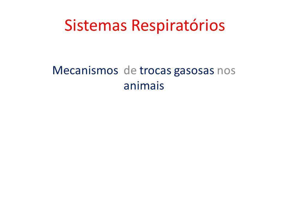 Sistemas Respiratórios Mecanismos de trocas gasosas nos animais