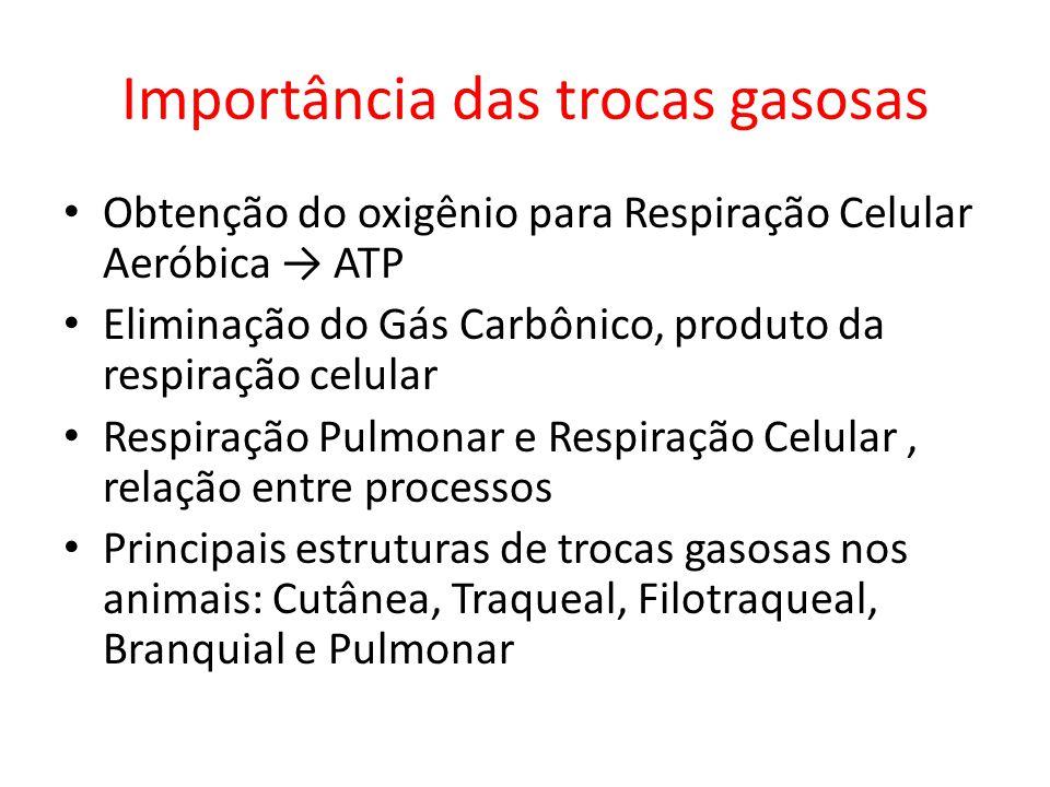 Importância das trocas gasosas Obtenção do oxigênio para Respiração Celular Aeróbica ATP Eliminação do Gás Carbônico, produto da respiração celular Re