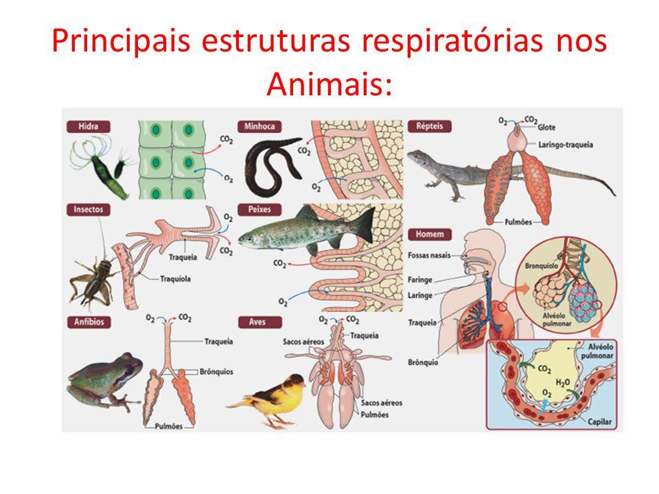Principais estruturas respiratórias nos Animais: