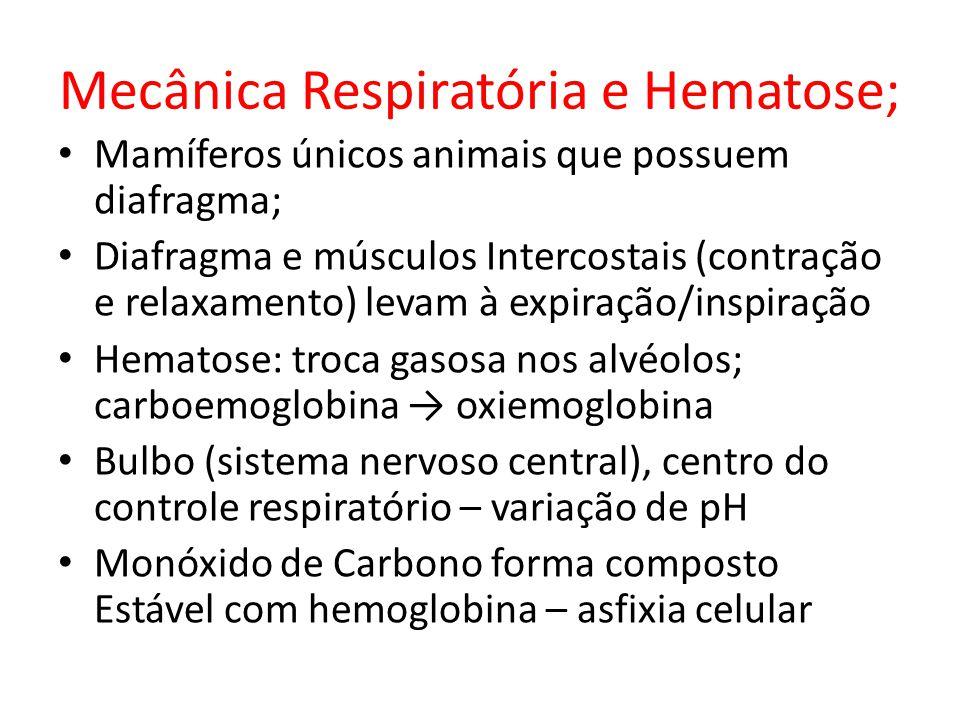 Mecânica Respiratória e Hematose; Mamíferos únicos animais que possuem diafragma; Diafragma e músculos Intercostais (contração e relaxamento) levam à