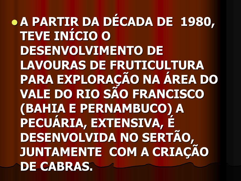 A PARTIR DA DÉCADA DE 1980, TEVE INÍCIO O DESENVOLVIMENTO DE LAVOURAS DE FRUTICULTURA PARA EXPLORAÇÃO NA ÁREA DO VALE DO RIO SÃO FRANCISCO (BAHIA E PERNAMBUCO) A PECUÁRIA, EXTENSIVA, É DESENVOLVIDA NO SERTÃO, JUNTAMENTE COM A CRIAÇÃO DE CABRAS.