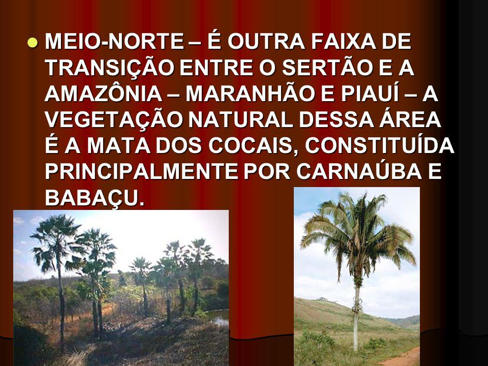 MEIO-NORTE – É OUTRA FAIXA DE TRANSIÇÃO ENTRE O SERTÃO E A AMAZÔNIA – MARANHÃO E PIAUÍ – A VEGETAÇÃO NATURAL DESSA ÁREA É A MATA DOS COCAIS, CONSTITUÍ