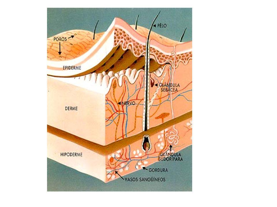 TECIDO EPITELIAL Especializado em revestir e proteger todas as superfícies do organismo; São formados por células justapostas, achatadas, e com pouco material intercelular.