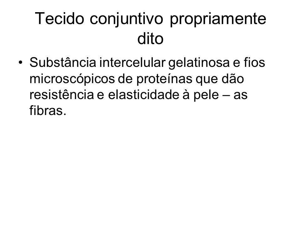 Tecido conjuntivo adiposo Células enormes, com grande quantidade de reserva de gordura.