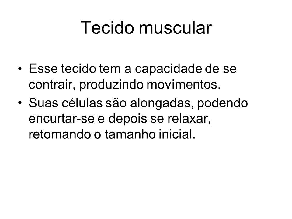 Tecido muscular Esse tecido tem a capacidade de se contrair, produzindo movimentos.