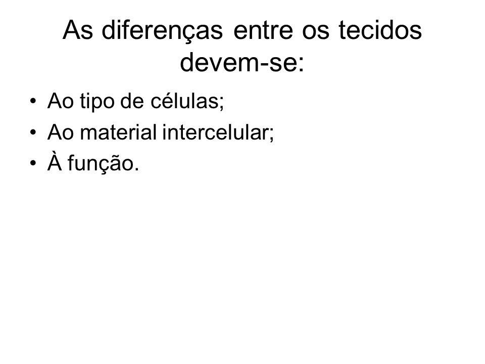 As diferenças entre os tecidos devem-se: Ao tipo de células; Ao material intercelular; À função.