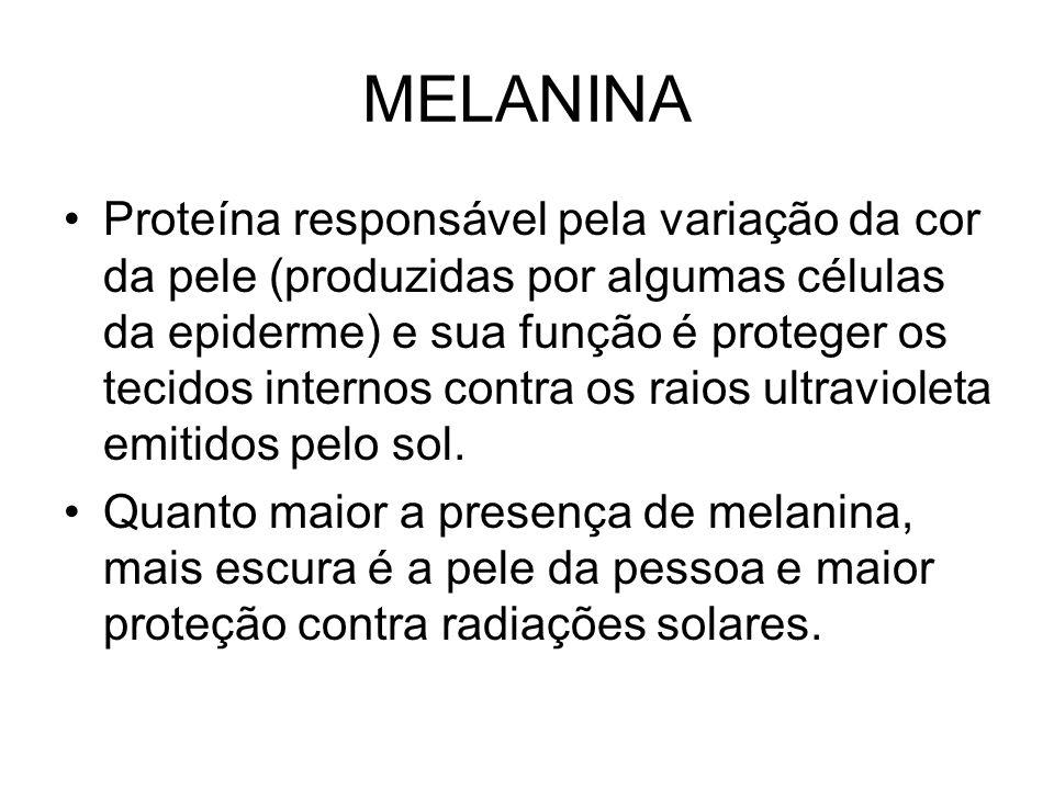 MELANINA Proteína responsável pela variação da cor da pele (produzidas por algumas células da epiderme) e sua função é proteger os tecidos internos contra os raios ultravioleta emitidos pelo sol.