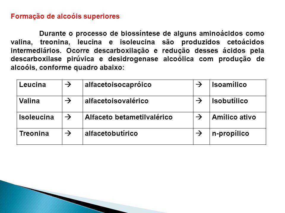 Formação de alcoóis superiores Durante o processo de biossíntese de alguns aminoácidos como valina, treonina, leucina e isoleucina são produzidos ceto