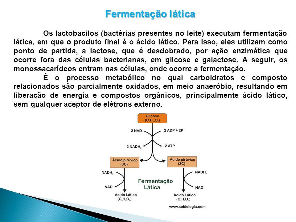 Fermentação lática Os lactobacilos (bactérias presentes no leite) executam fermentação lática, em que o produto final é o ácido lático. Para isso, ele
