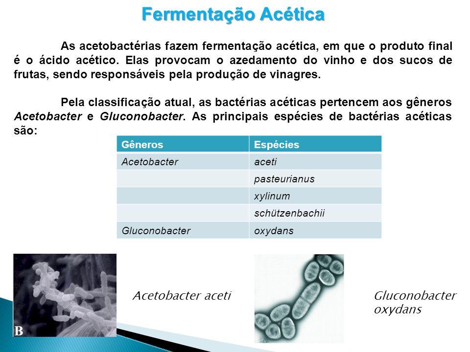 Fermentação Acética As acetobactérias fazem fermentação acética, em que o produto final é o ácido acético. Elas provocam o azedamento do vinho e dos s