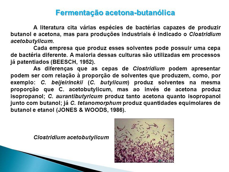 Fermentação acetona-butanólica A literatura cita várias espécies de bactérias capazes de produzir butanol e acetona, mas para produções industriais é