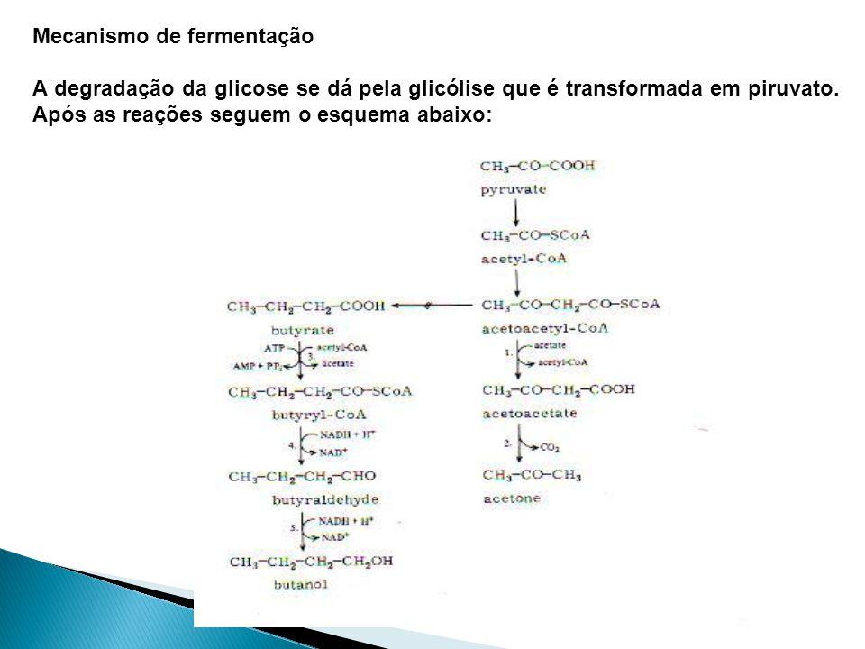 Mecanismo de fermentação A degradação da glicose se dá pela glicólise que é transformada em piruvato. Após as reações seguem o esquema abaixo: