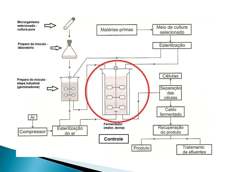 Fermentações Industriais Após a obtenção do piruvato na glicólise, vários são os destinos deste, como a fermentação, obtenção de ácido lático ou sua completa oxidação na respiração.