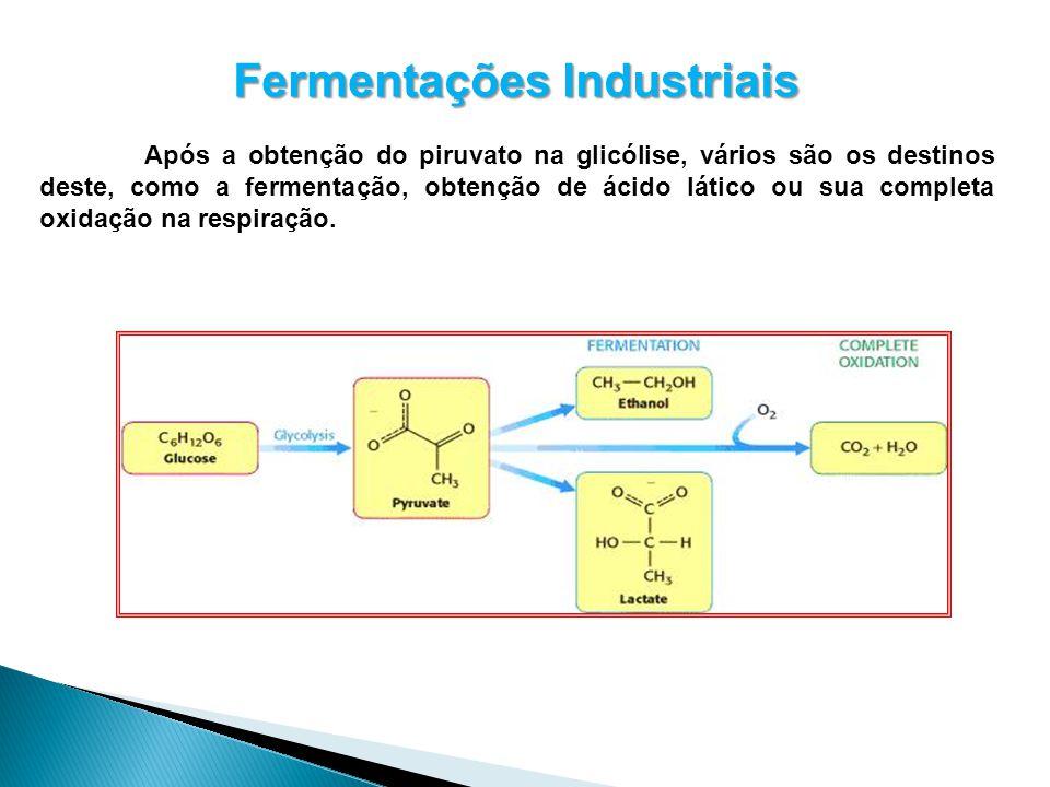 Fermentações Industriais Após a obtenção do piruvato na glicólise, vários são os destinos deste, como a fermentação, obtenção de ácido lático ou sua c