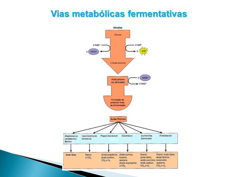 Classificação das Fermentações de acordo com os produtos formados As fermentações podem ser classificada em dois tipos, de acordo com a quantidade de produtos orgânicos formados, em: Homofermentativa: origina um produto.