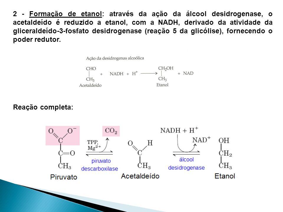 2 - Formação de etanol: através da ação da álcool desidrogenase, o acetaldeído é reduzido a etanol, com a NADH, derivado da atividade da gliceraldeído