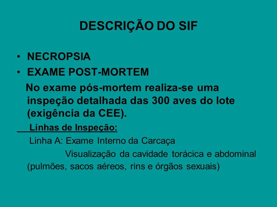 DESCRIÇÃO DO SIF NECROPSIA EXAME POST-MORTEM No exame pós-mortem realiza-se uma inspeção detalhada das 300 aves do lote (exigência da CEE). Linhas de