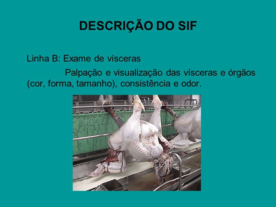 DESCRIÇÃO DO SIF Linha B: Exame de vísceras Palpação e visualização das vísceras e órgãos (cor, forma, tamanho), consistência e odor.