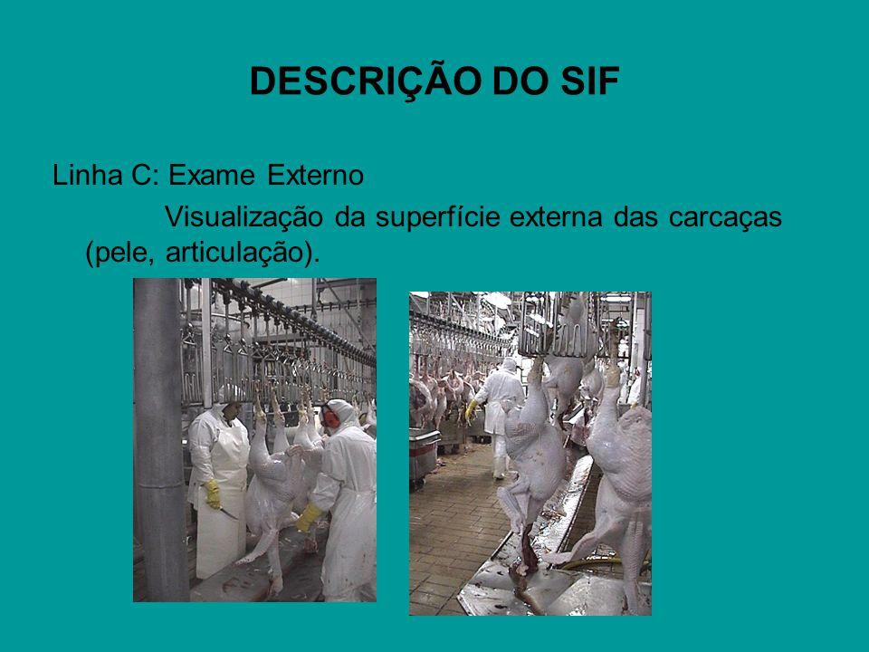DESCRIÇÃO DO SIF Linha C: Exame Externo Visualização da superfície externa das carcaças (pele, articulação).