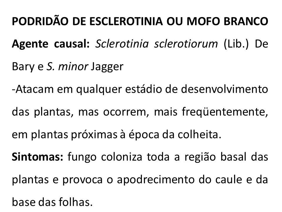PODRIDÃO DE ESCLEROTINIA OU MOFO BRANCO Agente causal: Sclerotinia sclerotiorum (Lib.) De Bary e S. minor Jagger -Atacam em qualquer estádio de desenv