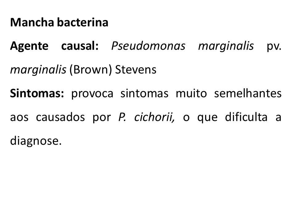 Mancha bacterina Agente causal: Pseudomonas marginalis pv. marginalis (Brown) Stevens Sintomas: provoca sintomas muito semelhantes aos causados por P.