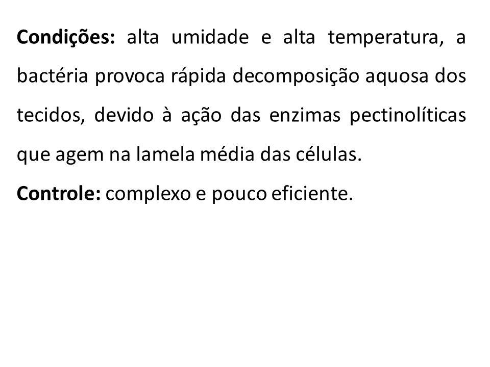 Condições: alta umidade e alta temperatura, a bactéria provoca rápida decomposição aquosa dos tecidos, devido à ação das enzimas pectinolíticas que ag