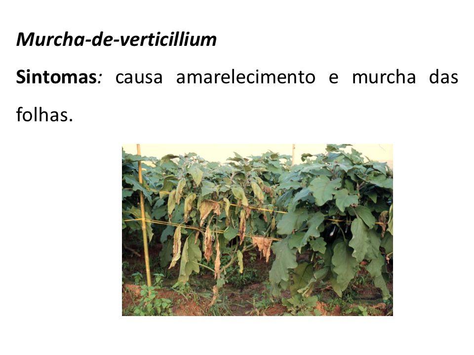 Murcha-de-verticillium Sintomas: causa amarelecimento e murcha das folhas.