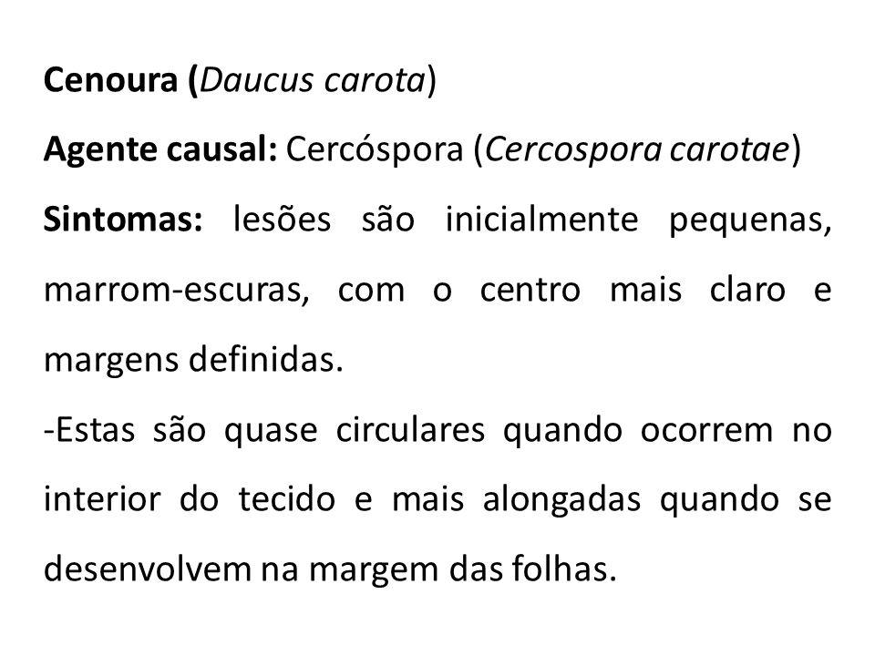 Cenoura (Daucus carota) Agente causal: Cercóspora (Cercospora carotae) Sintomas: lesões são inicialmente pequenas, marrom-escuras, com o centro mais c
