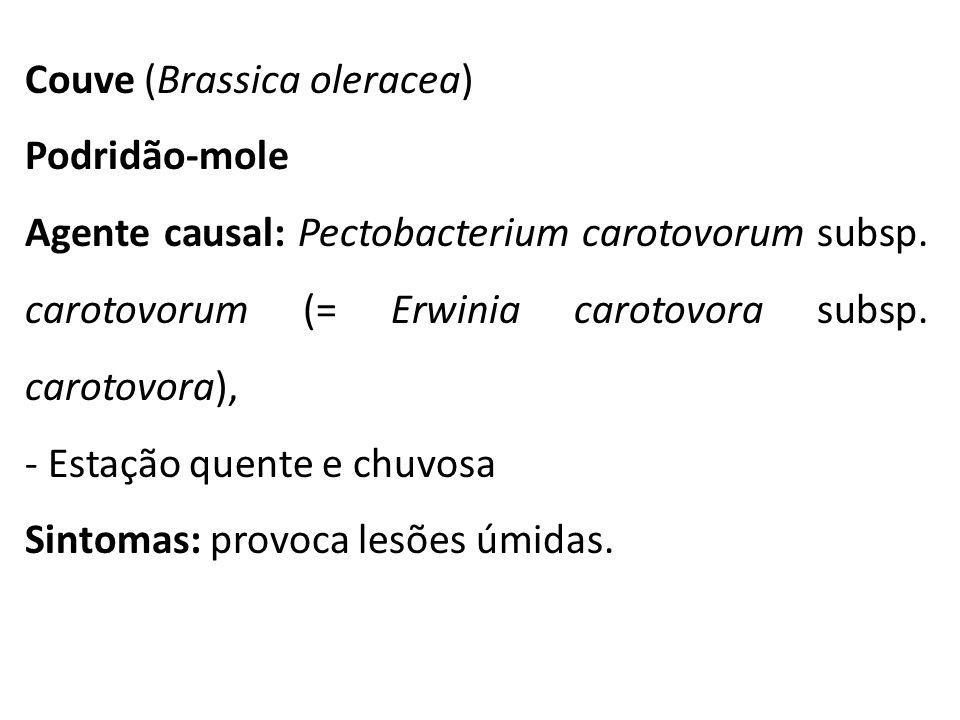 Couve (Brassica oleracea) Podridão-mole Agente causal: Pectobacterium carotovorum subsp. carotovorum (= Erwinia carotovora subsp. carotovora), - Estaç