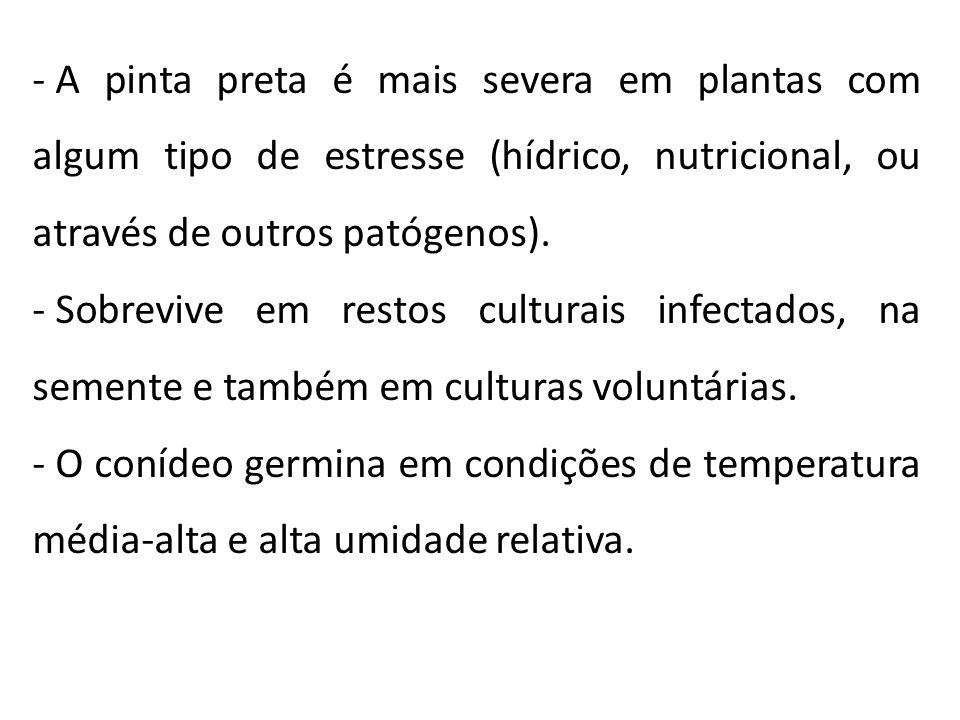 - A pinta preta é mais severa em plantas com algum tipo de estresse (hídrico, nutricional, ou através de outros patógenos). - Sobrevive em restos cult