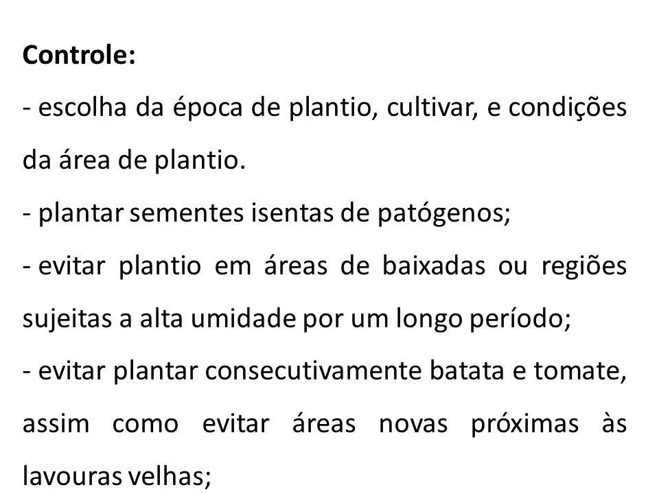 Controle: - escolha da época de plantio, cultivar, e condições da área de plantio. - plantar sementes isentas de patógenos; - evitar plantio em áreas