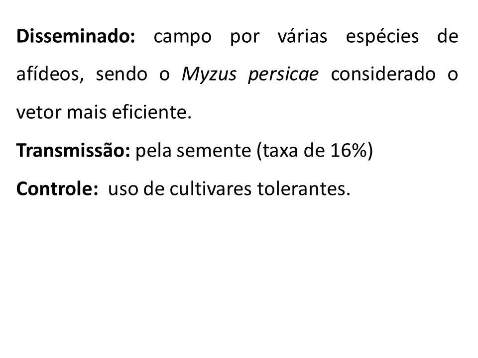 Disseminado: campo por várias espécies de afídeos, sendo o Myzus persicae considerado o vetor mais eficiente. Transmissão: pela semente (taxa de 16%)