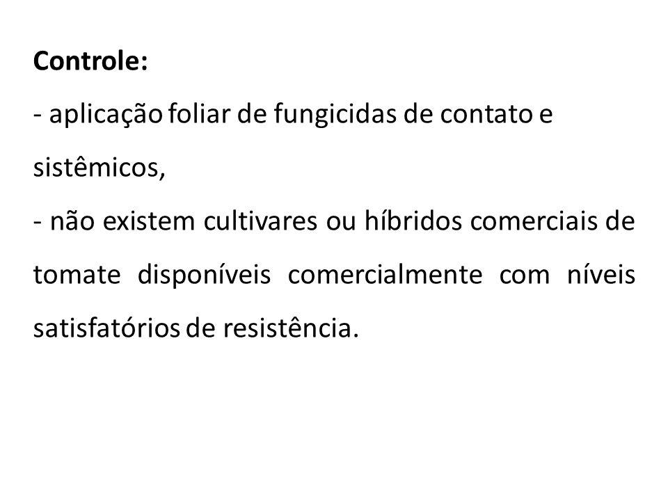 Controle: - aplicação foliar de fungicidas de contato e sistêmicos, - não existem cultivares ou híbridos comerciais de tomate disponíveis comercialmen