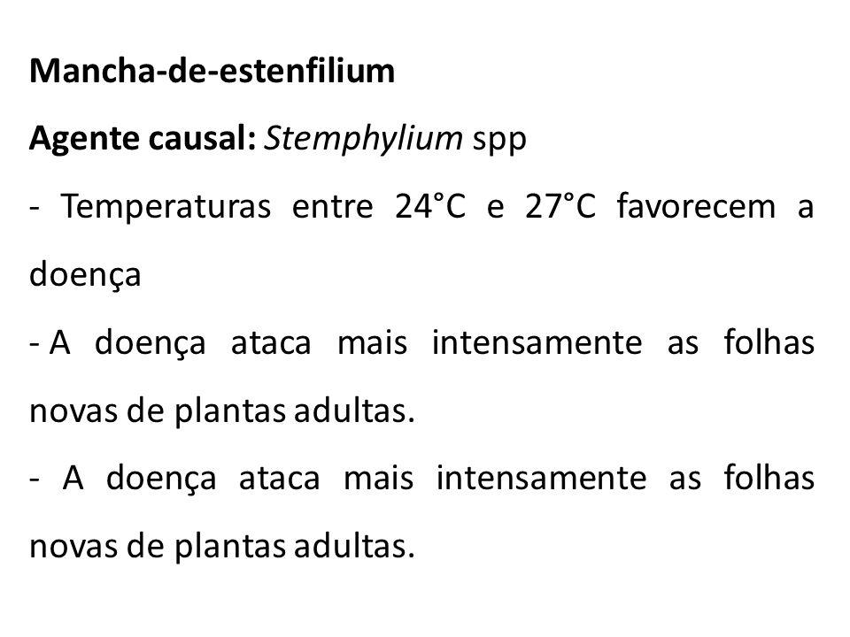 Mancha-de-estenfilium Agente causal: Stemphylium spp - Temperaturas entre 24°C e 27°C favorecem a doença - A doença ataca mais intensamente as folhas