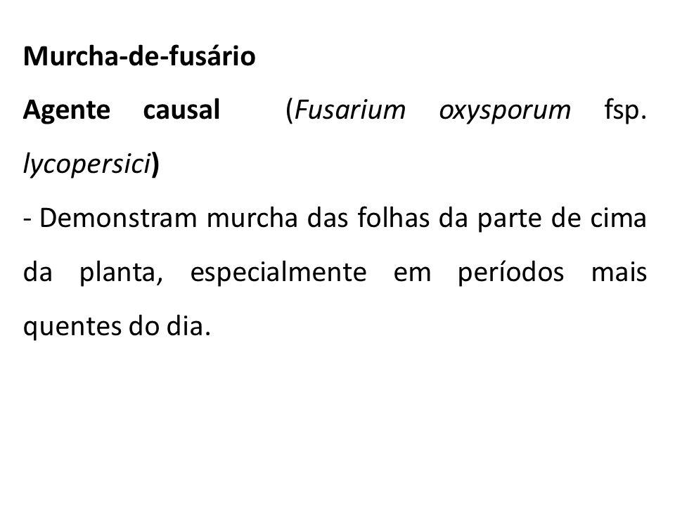 Murcha-de-fusário Agente causal (Fusarium oxysporum fsp. lycopersici) - Demonstram murcha das folhas da parte de cima da planta, especialmente em perí