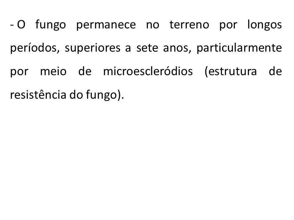 - O fungo permanece no terreno por longos períodos, superiores a sete anos, particularmente por meio de microescleródios (estrutura de resistência do