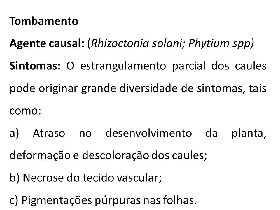 Tombamento Agente causal: (Rhizoctonia solani; Phytium spp) Sintomas: O estrangulamento parcial dos caules pode originar grande diversidade de sintoma