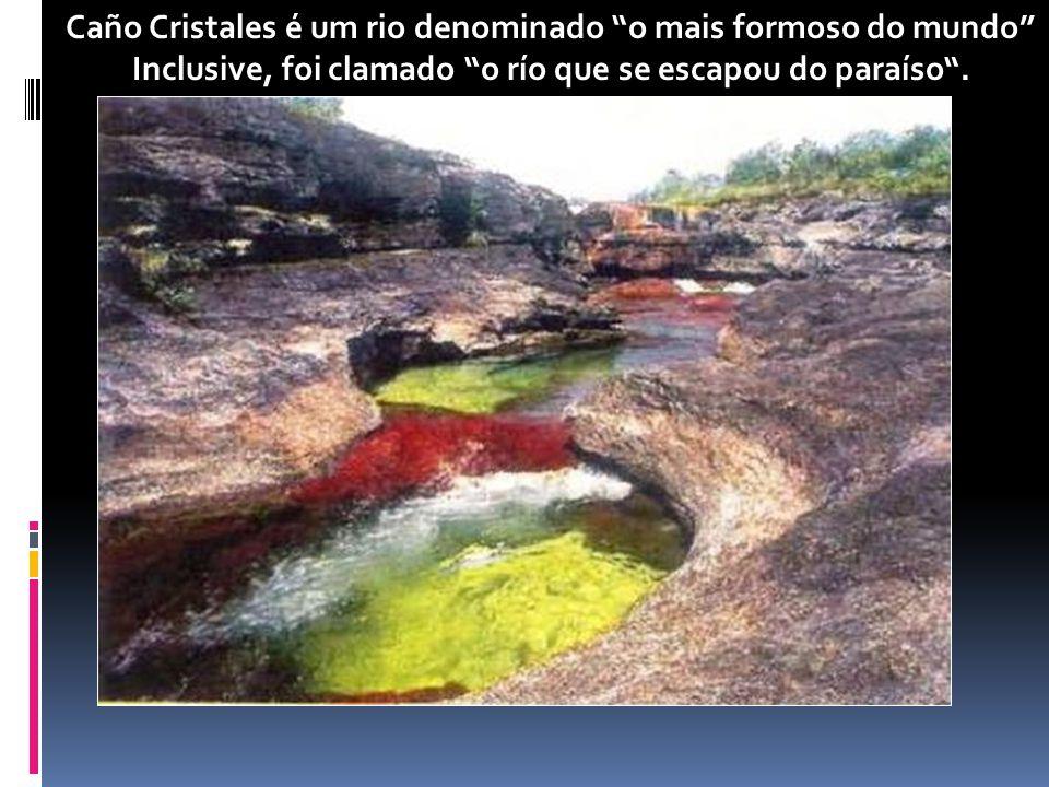 Caño Cristales é um rio denominado o mais formoso do mundo Inclusive, foi clamado o río que se escapou do paraíso.