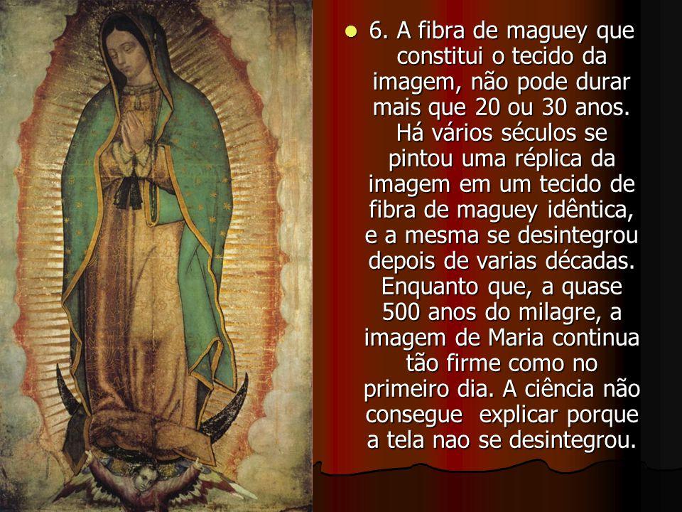Jamais esqueça que a Virgem de Guadalupe, está e estará sempre com você.