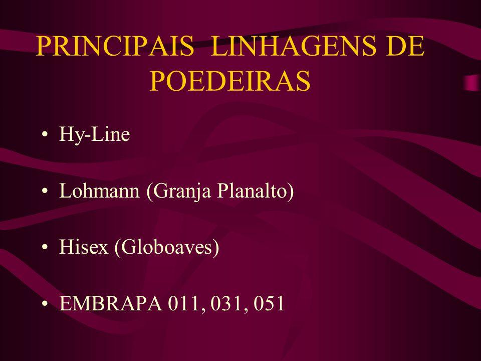 PRINCIPAIS LINHAGENS DE POEDEIRAS Hy-Line Lohmann (Granja Planalto) Hisex (Globoaves) EMBRAPA 011, 031, 051