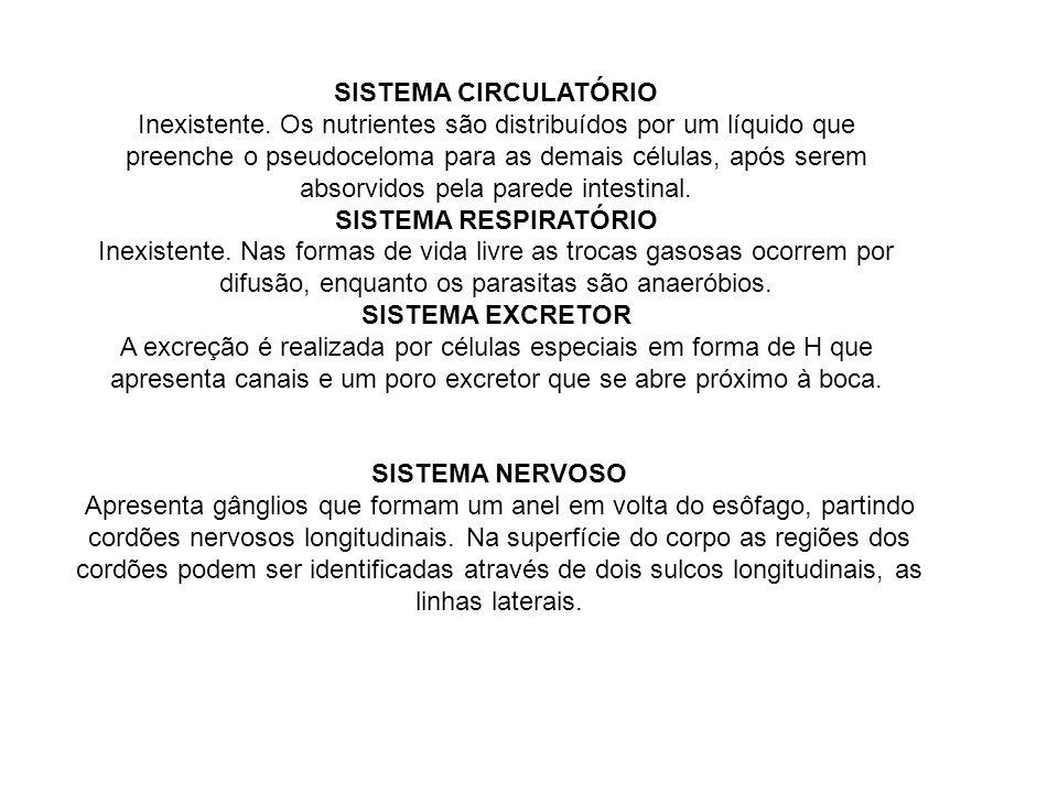 SISTEMA CIRCULATÓRIO Inexistente.