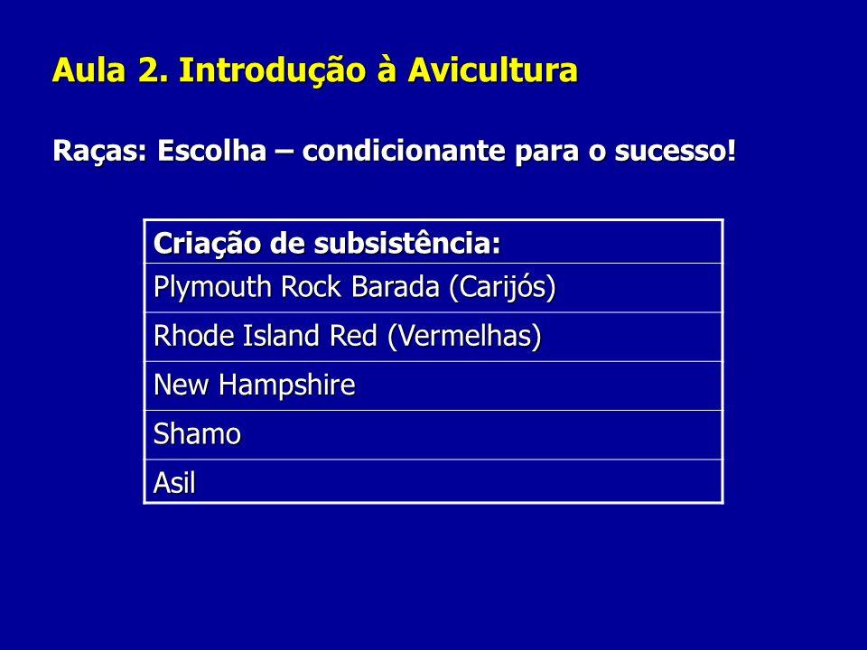 Aula 2. Introdução à Avicultura Raças: Escolha – condicionante para o sucesso! Criação de subsistência: Plymouth Rock Barada (Carijós) Rhode Island Re