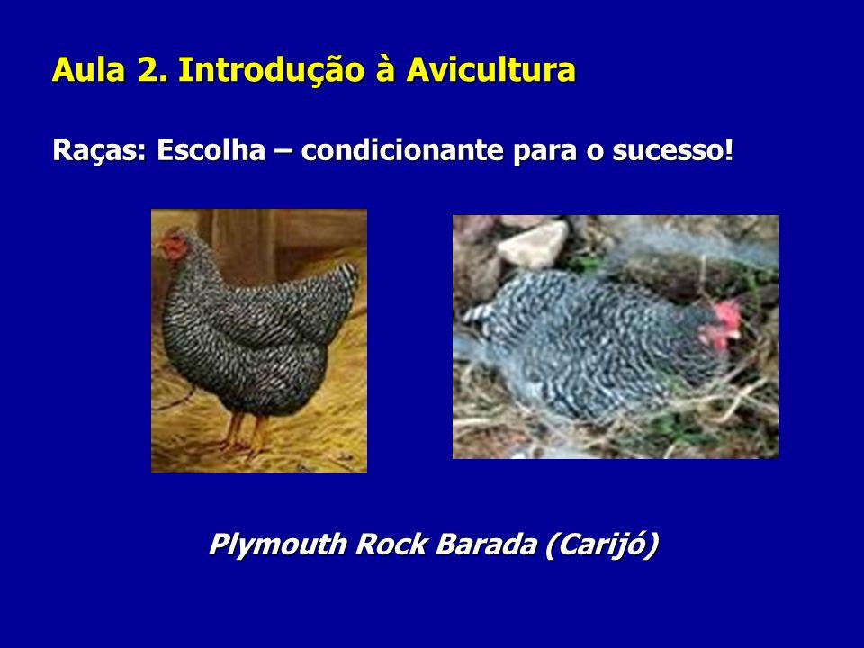 Aula 2. Introdução à Avicultura Raças: Escolha – condicionante para o sucesso! Plymouth Rock Barada (Carijó)