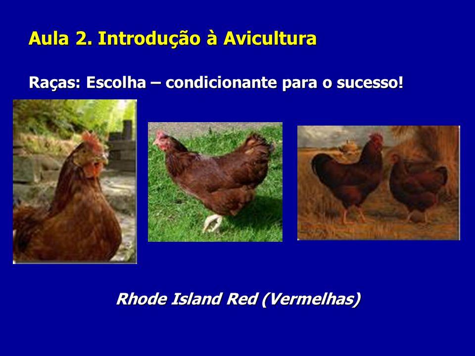 Aula 2. Introdução à Avicultura Raças: Escolha – condicionante para o sucesso! Rhode Island Red (Vermelhas)