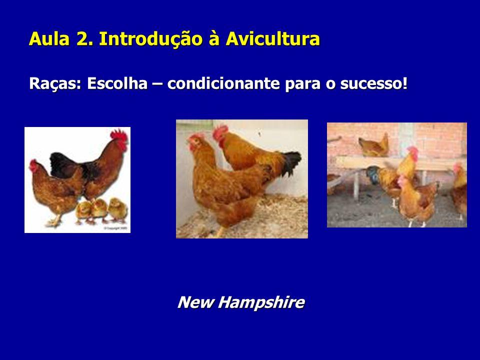Aula 2. Introdução à Avicultura Raças: Escolha – condicionante para o sucesso! New Hampshire